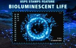 Bioluminescentni život na markama SAD-a